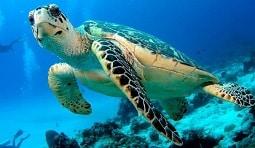 Marine Life Koh Tao Villas